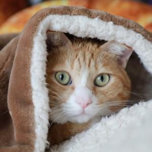 肌寒い日の猫ら。