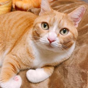 愛しい毛布を守る猫。