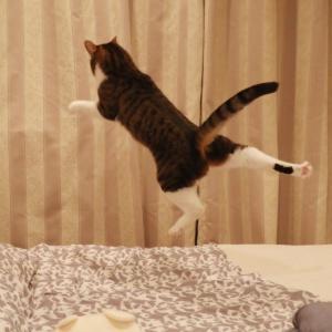 毎日跳びたいの。