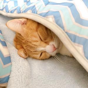 いつもの毛布じゃないけれど。