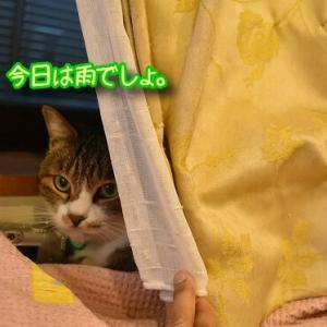 七ちゃんの秘密、キョンちゃんのおたけび。私の秘密(?)