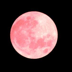 6月満月♡恋が叶うストロベリームーンガンジス・ソウルメイトのお知らせ♪。*゚○.+