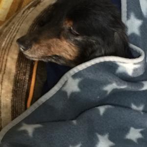 愛犬ルークが17歳で永眠しました