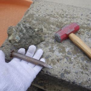 東松山で化石を掘ろう