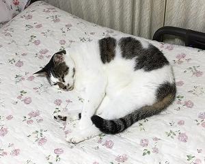 実家猫トトロ~のびのび
