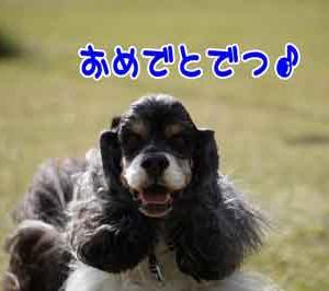 こゆきちゃんのHappy News\(^o^)/