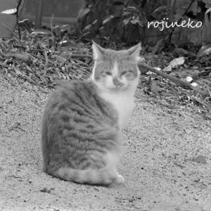 遠巻きに見守る猫