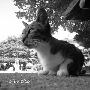 猫たちの世界