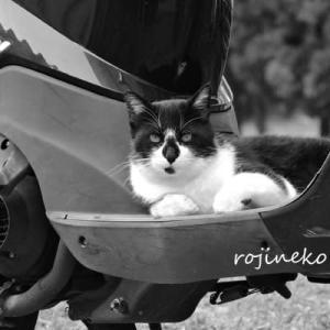 バイクで逃げる?