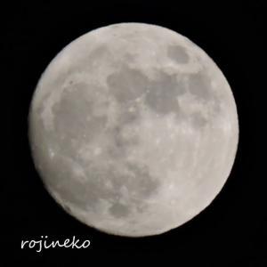 今日は満月のハロウィン。