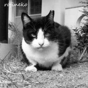 サクラ猫さん