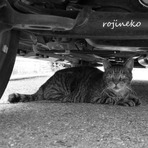 探偵さんも車の下にいる。
