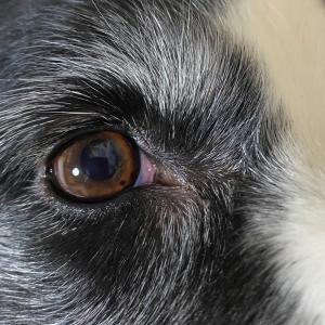 JJ子の眼に 黒い点ができてるΣ(゚д゚lll)