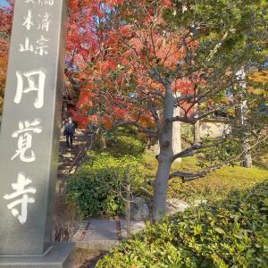 鎌倉秋散歩