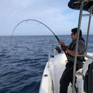 日本海沖で釣れたクロマグロの漬け丼