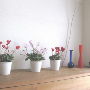 ●ズボラ流〜一瞬で花を2倍にする方法