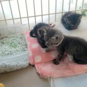 子猫たちゆたぽん