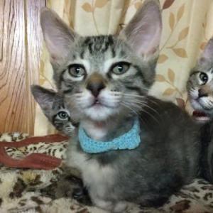 子猫達の仮の名前