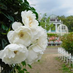 5月の鶴舞公園(2/2)バラが咲いた