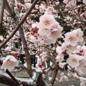 春は、期待と不安を大きなエネルギーに変える不思議な力がある?