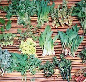山菜と言えば、天ぷらですね?3月31日は、山菜の日。