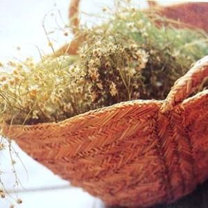 カモミールの花はお茶にも種にも・・