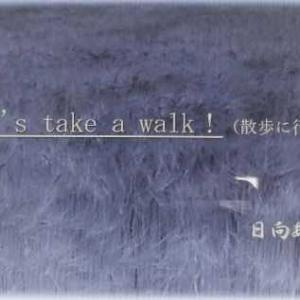 ノルディックウォーキング(散歩に行こう)