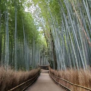 京都に行ってきました・・・画像たち・・・1日目・・・