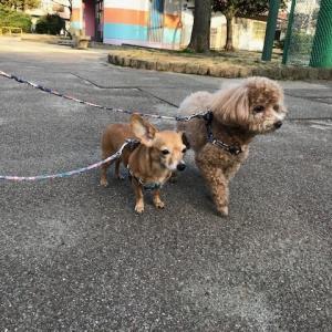 3匹のおっさんではなく愛玩犬