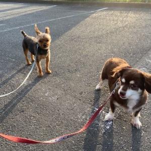 暑さにも負けない愛玩犬君たち