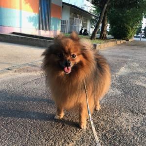 この暑さに愛玩犬もぐったり!