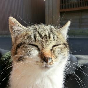 かわいい子猫はヒザに乗せろ、旅なんかさせんな。
