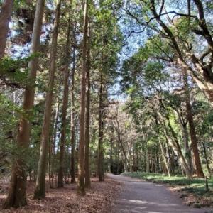 西那須野を行く 乃木神社の樹林 @栃木県