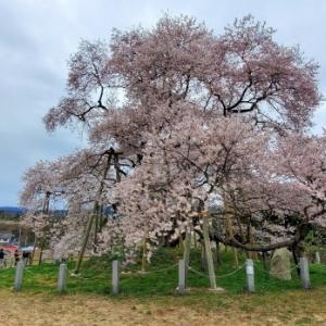戸津辺の桜 @福島県矢祭町
