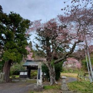 常隆寺の桜 @福島県棚倉町