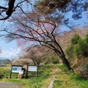 4月4日の桜巡り/長沼城址 @福島県須賀川市