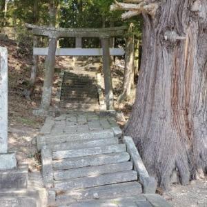 4月4日の桜巡り/菅原神社 @福島県須賀川市