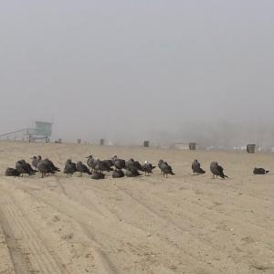 霧で寒いビーチ