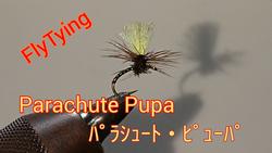 259匹目:FlyTying動画:ParachutePupa/パラシュートピューパ