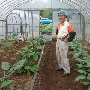 元気な野菜の姿形がコレー健康な野菜を育てたい