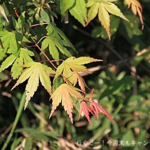2019GW 月山富田城の絶壁の九十九折