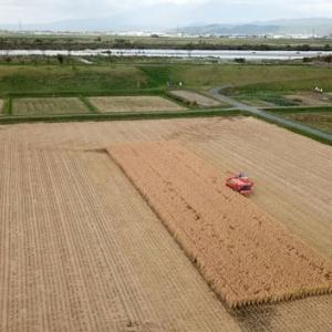 「作ぜん農園」さんの稲刈り最終日を空撮