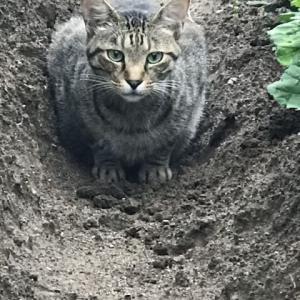 半野良猫「ちゃっぴー3号」の近況 vol.32