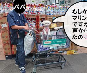 楽しみがないワンコ~家猫修行?(動画あり)