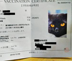 あきらめ気味の私…ワクチン接種