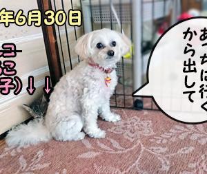 6月最後の超簡単更新(動画あり)