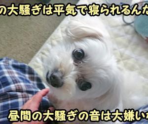 ケージのグレードアップ~達郎さーん!