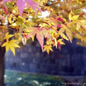 皇居へ③。秋深く。