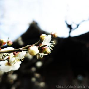 寺社の春。