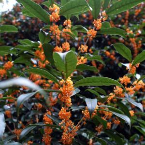 新宿御苑お散歩2・秋の植物たち。